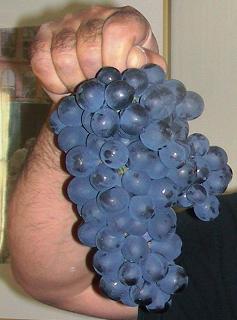 anghor_2008-1.png